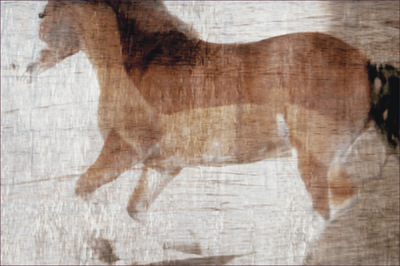 Museum Quality Photographic Art - Fresco I 2012 48 x 32 inches (121.92 x 81.28 cm) Tonka taught me that when a horse steals your heart ... its just to make it bigger.