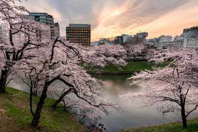 Cherry blossoms in full bloom and cityscape at sunset at Chidorigafuchi moat, Tokyo, Japan