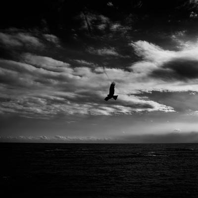 Bird Flying Over The Sea, Kamogawa, Chiba Prefecture, Japan